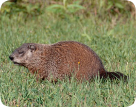 Rodent Control In Fort Lauderdale